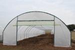 Стоимость строительства теплиц для овощей частично возместят