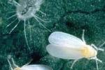 Вредители и болезни в теплице