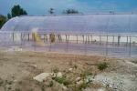 Ткачев: Кубани для импортозамещения овощей нужно увеличить теплицы