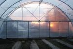 Тепличные комплексы для весенне-летнего выращивания винограда и земляники.