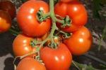 Когда высеивать семена овощей на рассаду?